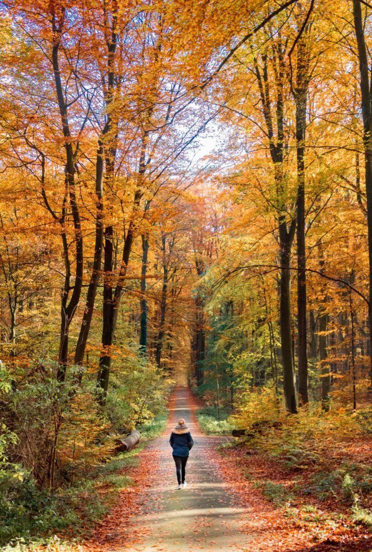 Person går i en skov om efteråret