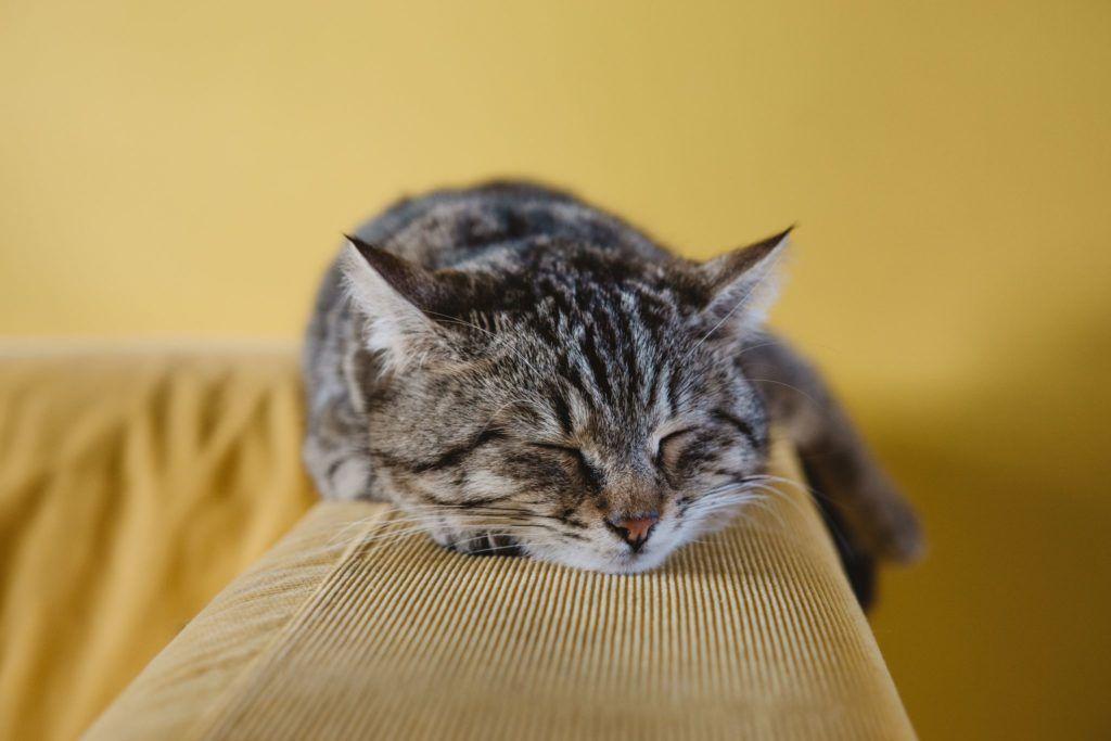 Kat hviler på armlæn