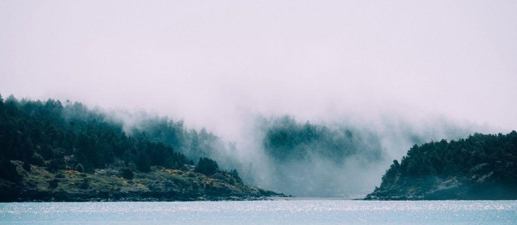 Skov og vand